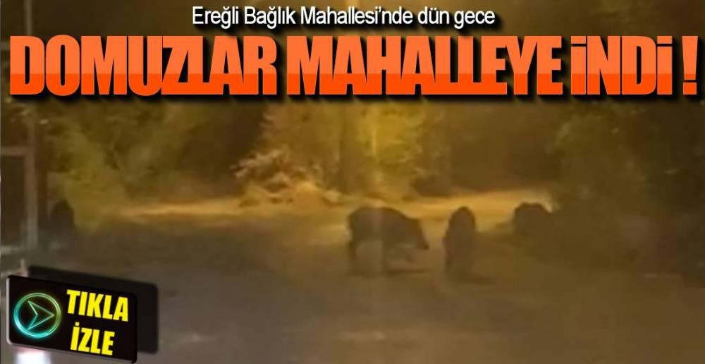 12 YABAN DOMUZU MAHALLEDE !.