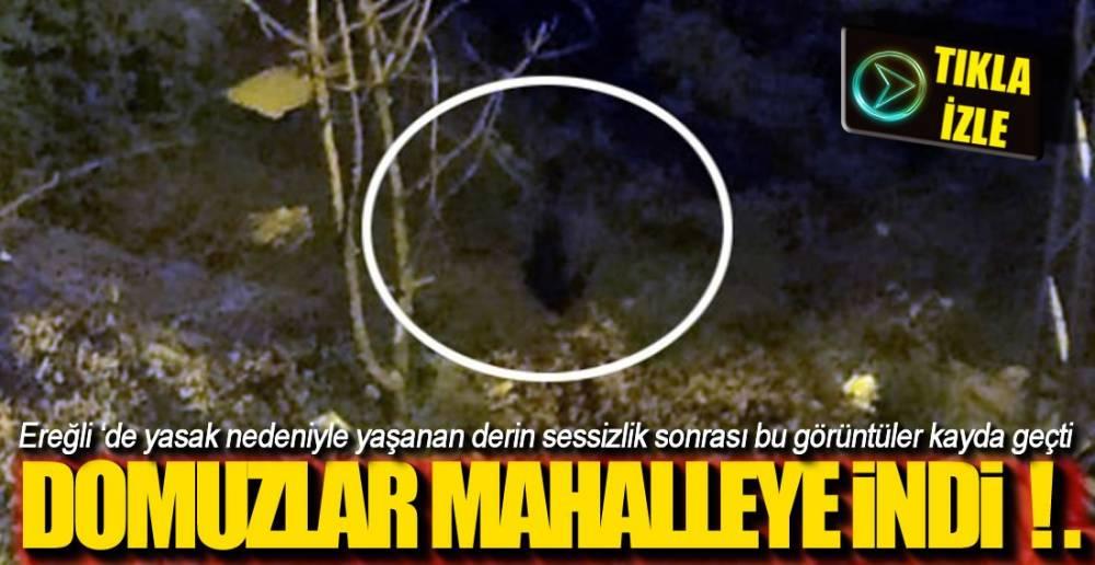 CEP TELEFONU İLE KAYDEDİLDİ!.