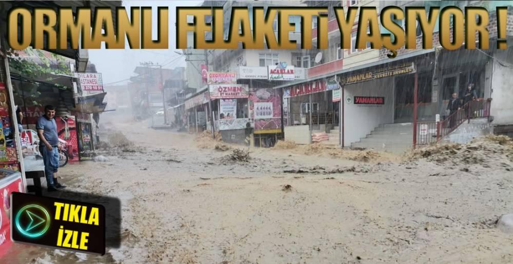 ORMANLI'DA SEL FELAKETİ !.