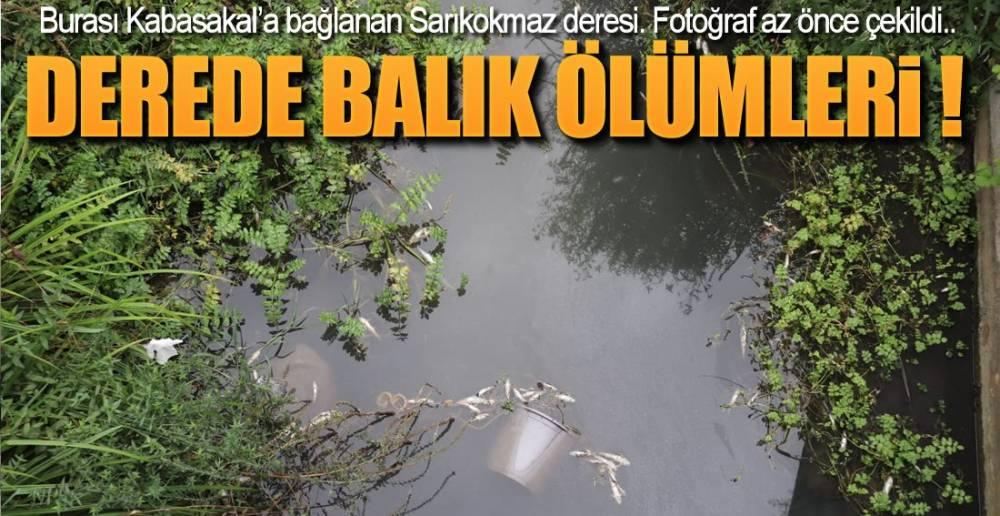 VATANDAŞ İHBAR ETTİ !.
