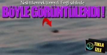 EREĞLİ'DE GÖRÜLDÜ !.