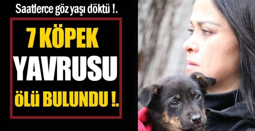 DEVLET BİZE YARDIMCI OLSUN !.