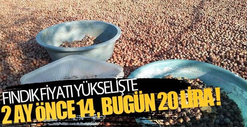 FINDIK FİYATI 24 LİRAYA KADAR ÇIKABİLİR !.