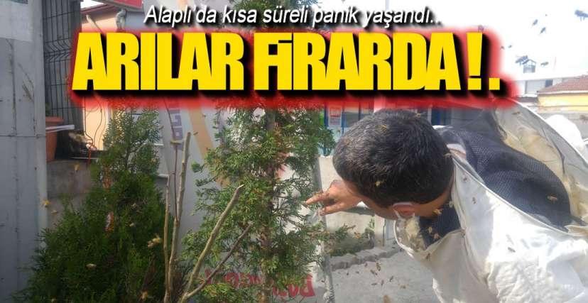 FİRARİ ARILAR !.