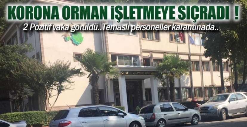 ORMAN İŞLETMEYE SIÇRADI !.