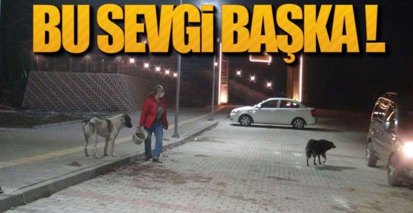 BU SEVGİ BAŞKA !.