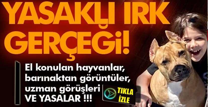 SEVİMLİ, MİLLİ, CANAVAR !..